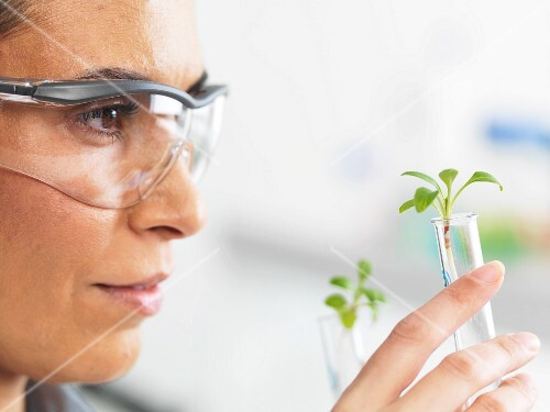 A scientist comparing two plants