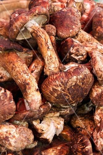 Fresh matsutake mushrooms at a market in Lijiang, China