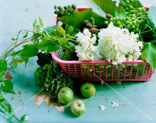 Flowers and sprigs of unripe grapes and blackberries in plastic basket