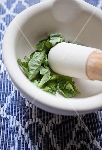 Fresh basil in a mortar