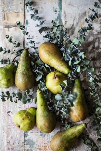 Pears and eucalyptus