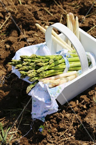Green and white asparagus in a wooden basket in a field