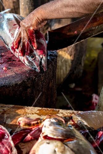 Tuna being gutted