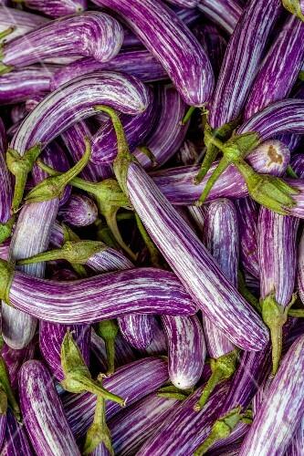 Purple and white aubergines
