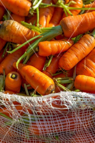 Carrots in a white sack