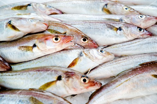 Whiting at a fish market