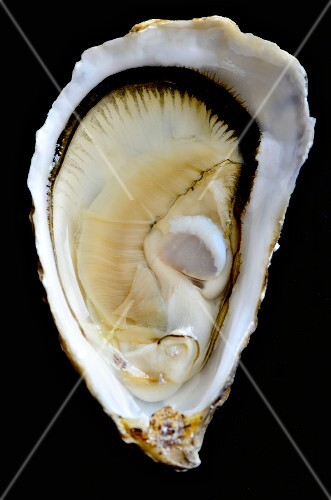 Close-up of an opened oyster