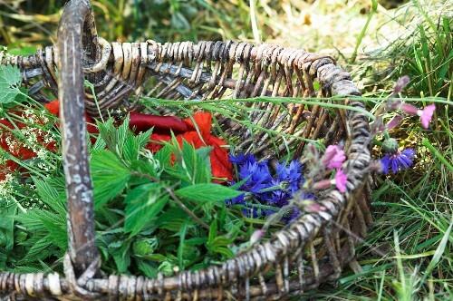 A basket of edible wild herbs (meadowsweet, cleaver, poppies, cornflowers, cranesbills)