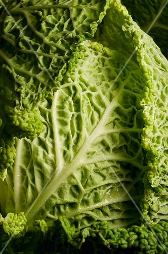 Savoy cabbage (detail)