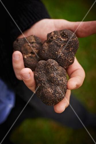 Three truffles
