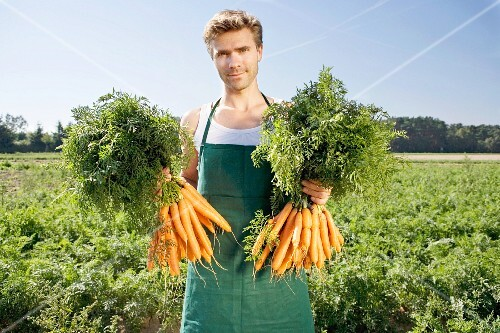 A farmer holding two bunches of freshly picked carrots