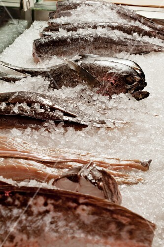 Various types of fish at a market