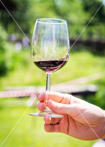 A man holding a glass of Saperavi (dry red wine, Georgia)