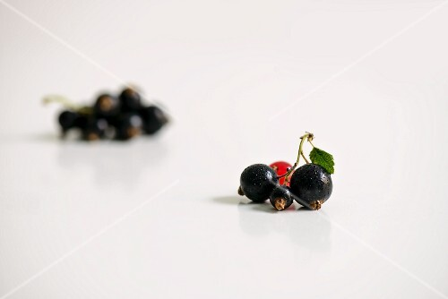 Blackcurrants in front of a redcurrant