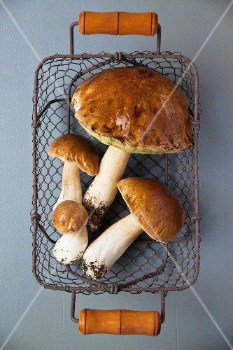 Fresh porcini mushrooms in a wire basket