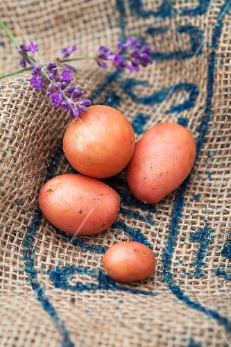 Red potatoes on a piece of jute