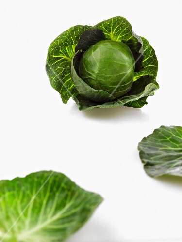 Savoy cabbage and white cabbage leaves