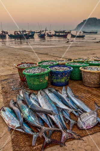 The morning catch laid out on the beach at Ngapali (Myanmar)