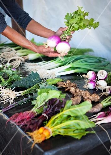 Freshly harvested mini vegetables