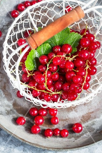 A basket of redcurrants