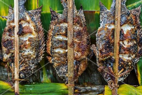 Grilled tilapia fish at a market (Vientiane, Laos)