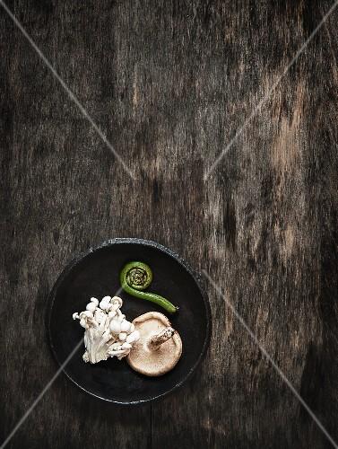 An arrangement featuring enoki mushrooms, shiitake mushrooms and a fiddlehead fern