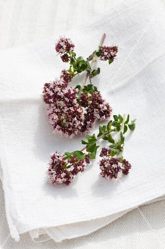 Flowering origanum on a linen cloth outside