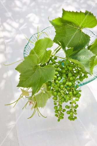 Vine leaves and green, unripe grapes on a glass cake stand as decoration on a garden table