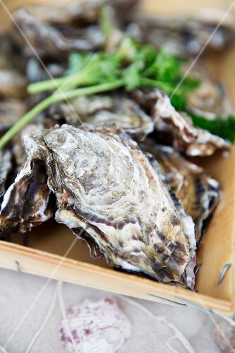 Fresh oysters in a crate