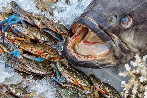 Crabs and fish at a market in Bangkok