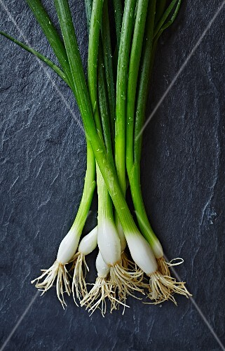 Fresh spring onions on a slate surface