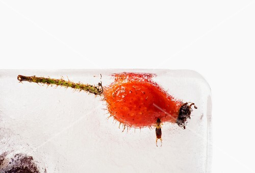 A rosehip and a beetle in an ice block