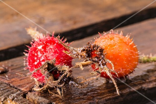 Two frozen rosehips on a wooden crate