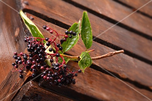 A sprig of elderberries on a wooden crate