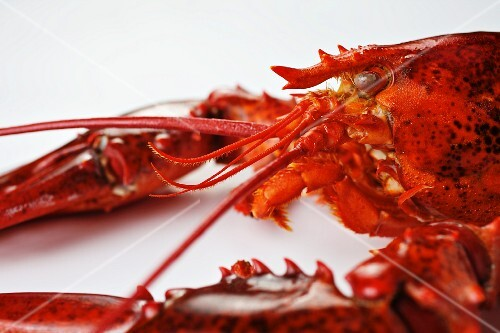 Detail of a lobster on a white surface