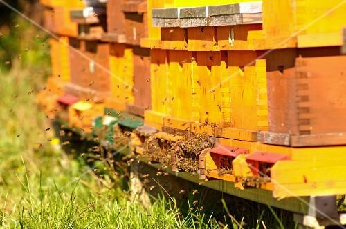 Beehives (Carinthia, Austria)