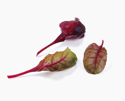 Three chard leaves