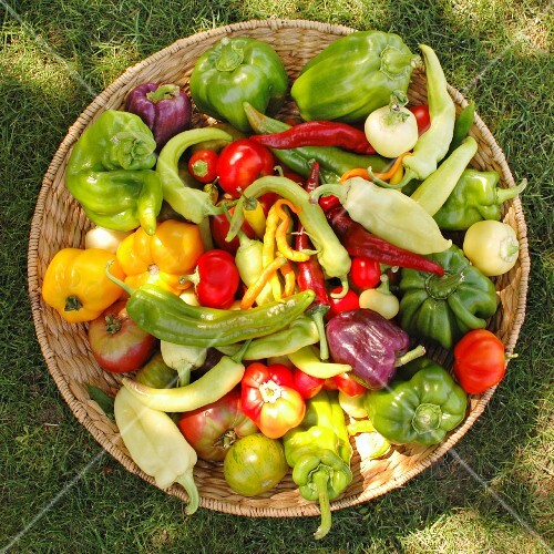 A basket of vegetables featuring peppers from the Seewinkel region (Burgenland, Austria)