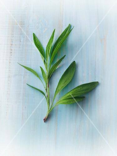 A sprig of fresh arnica