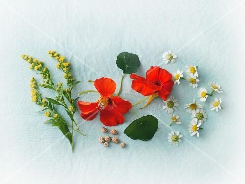 Fresh goldenrod, camomile and nasturtiums