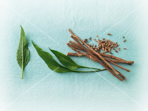 Fresh echinacea leaves and liquorice roots