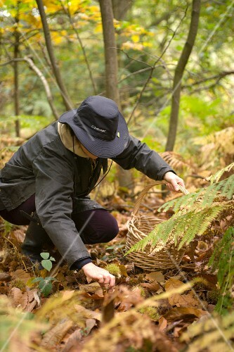 A woman collecting chestnuts in a forest