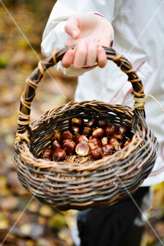 A girl in a forest holding a basket of edible chestnuts