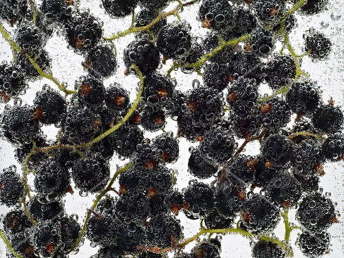 Blackcurrants under water with bubbles