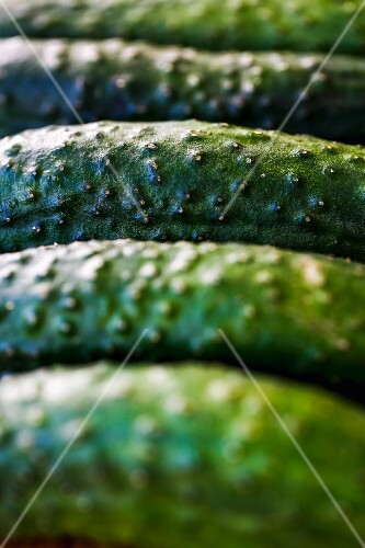 A row of gherkins