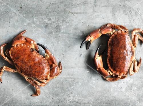 Two edible crabs