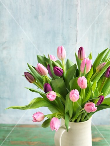 Tulips in a jug