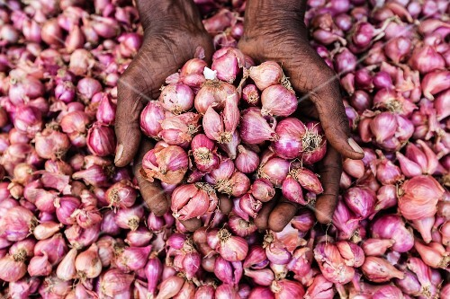 A woman's hands cupping shallots