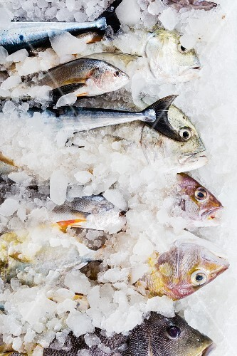 Various types of fresh fish on ice for sale