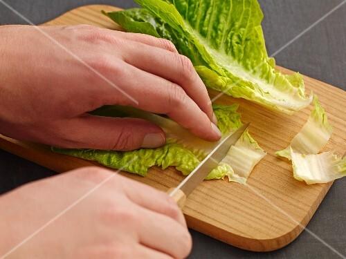 Cos lettuce being sliced